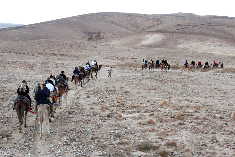 In Negev, camels accompany Bedouins' shifts photo